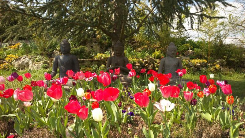 Bunga di Buddha Garden - New Hamlet